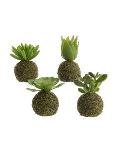 Plc Succulent On Moss Ball 4Ass Green