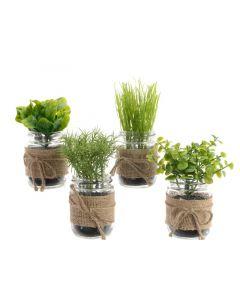 Plc Herbs In Glass Pot 4Ass Green