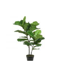 Plc Fig Tree In Pot Green Dia54X97Cm
