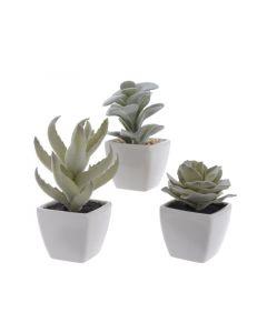 Plc Succulent In Con Pot 3Ass Grey Green 7X7X13Cm 7X7X11Cm 7X7X9Cm