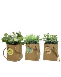 Plc Herb In Paper Bag 3Ass Green 6X8.5X18.5Cm