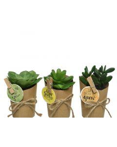 Plc Succulent I Paper Pot 3Ass Green Dia7.5X11Cm