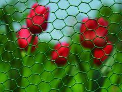 Hex.Plastic 6073 R 25 100 100Cm 10M