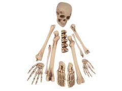 Deco Skelet