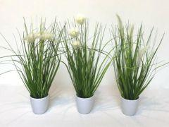 Gras In Bloempot 36Cm Cream 3 Assortimenten Prijs Per Stuk