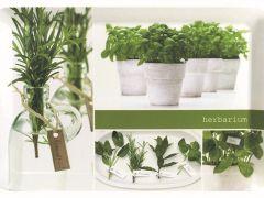 Plateau 46X31 Herbarium Novastyl
