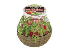 Patio Citro Garden Assortiment Prijs Per Stuk/Verschillende kleuren