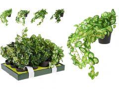Hangplant In Pot 10X8.5Cm Totaal 30X25X40Cm 4 Assortiment per stuk