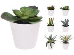 Plant In Pot 7X7X15Cm 6 Assortiment Per Stuk Stijlen