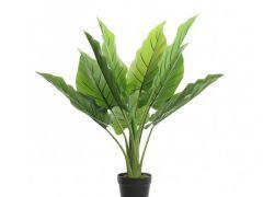 Plc Plant In Pot Green 73X74Cm