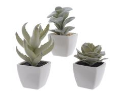 Plc Succulent In Con Pot 3Ass Grey Green 7X7X13Cm 7X7X11Cm 7X7X9Cm