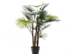 Plc Fortunei Palm In Pot Green 90Cm