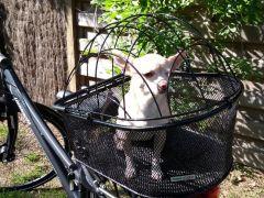 Mandje Staal Op Pakdrager Voor Hond Easyfix
