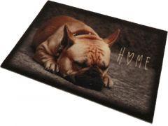 Deco Star Dieren Hond Home 40X60