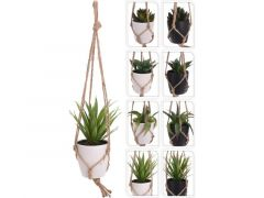 Plant In Pp Pot - Touw 60Cm 8 Assortiment Prijs Per Stuk/Kleur