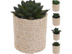 Plant In Pot 8X8X14Cm 4 Assortiment Prijs Per Stuk/Kleur