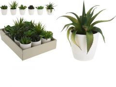 Plant In Pot 10X10X15Cm Pp Wit 6 Assortiment Prijs Per Stuk/Kleur