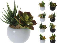 Vetplantje In Keramiek Pot Assortiment, Prijs Per Stuk