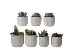 Vetplant Plastic In Pot 12X12X15Cm