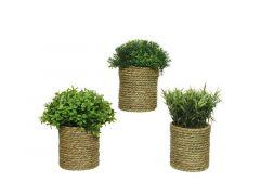 Plant Pe Pot Gras Dia21X22Cm 3 Assortiment Prijs Per Stuk