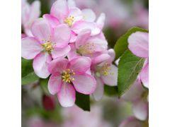 Duni Serviet 33X33Cm 20 St. Apple Blossoms