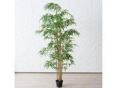 Bamboe In Pot Plastiek Indoor H180Cm Groen
