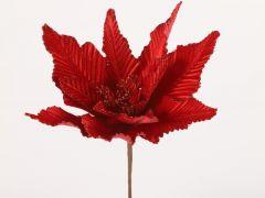Euphorbia A Rood 15X5X48Cm
