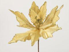 Euphorbia A Goud 15X5X48Cm