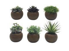 Succulent In Pot 16Cm 6 Assortimenten Prijs Per Stuk