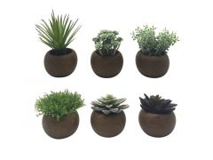 Succulent In Pot 13Cm 6 Assortimenten Prijs Per Stuk