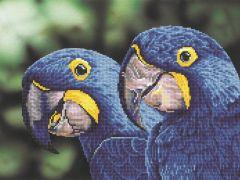 Diamond Dotz Blue Hyacinth Macaws: 52X37Cm