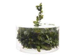 Spiraal Groene Buxusbladeren Dia1.5X750Cm Groen