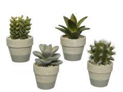 Vetplant In Pot Plastic D6.5Xh11Cm Groen 4 Assortimenten Prijs Per Stuk