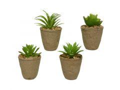 Vetplant In Pot Plastic D6X6X6Xh8Cm Groen Assortiment - prijs per stuk