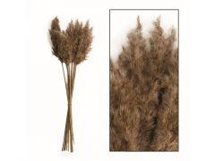Wild Reed Plume Vinz Nature 65Cm 20St