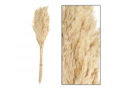 Wild Reed Plume Vinz Nature 75Cm 10St