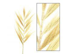 Plume Grass 118Cm