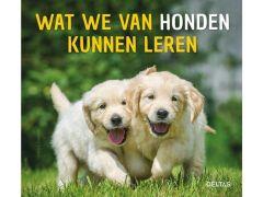 Wat We Van Honden Kunnen Leren