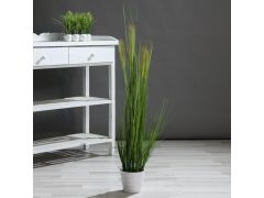 Gras In Witte Pot 110Cm