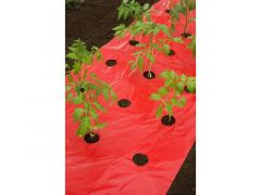 Mulch-/Kweekfolie Voor Tomaten  20Xø80 Mm - 0,95 X 5 M