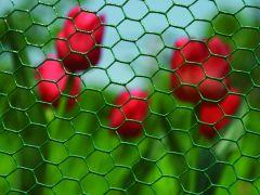 Hexanet Plastic 25-1.00 H.50Cm 25M
