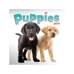 Kalender Puppies 30X30