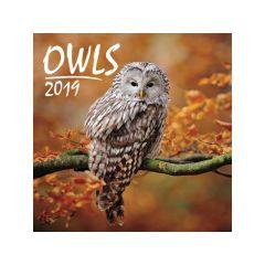 Kalender Owls 30X30