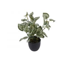 Kuntstplant Zebrina Sunshine In Pot Green/White 25Cm