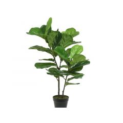 Plc Fig Tree In Pot Green Dia54X97Cm
