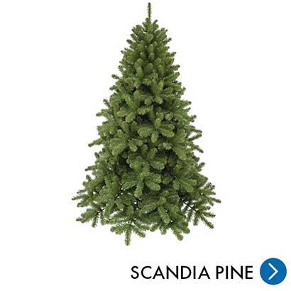 Kerst - Scandia Pine