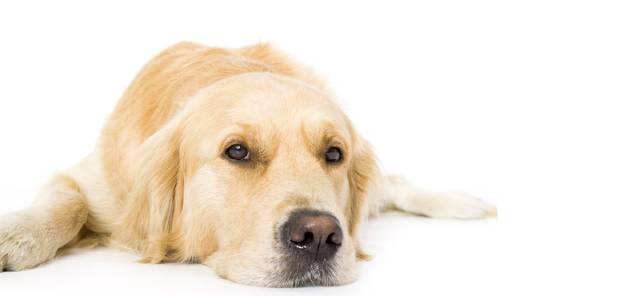 Dieren - Honden