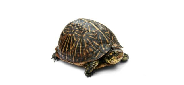 Dieren - Reptielen