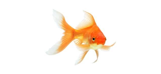 Dieren - Vissen